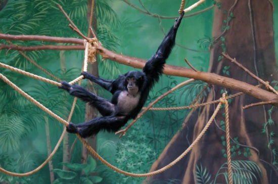 tour rosamond gifford zoo pocketsights